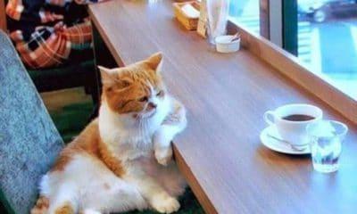 Chats et café